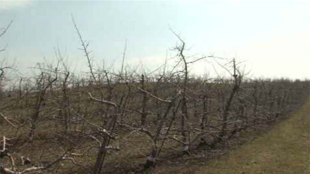 The apple trees at Lyman Orchards are dormant right now, but if there are a few more warm days, they will come out of that state and start an early apple season. (WFSB)