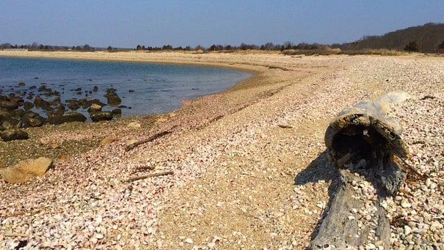 Walking along the shore of Bushy Point Beach