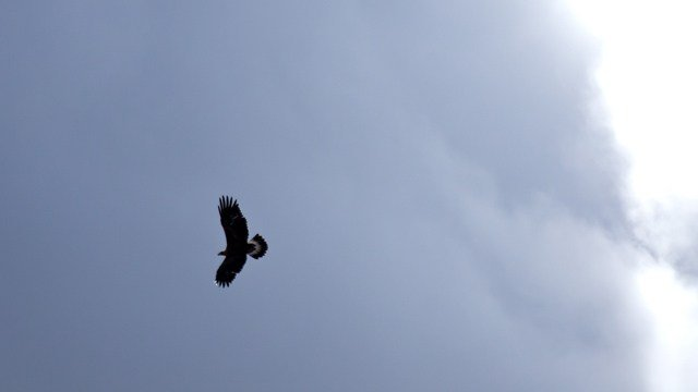 Fairfield police said three people had scary encounters with hawks recently.  (GraphicStock)