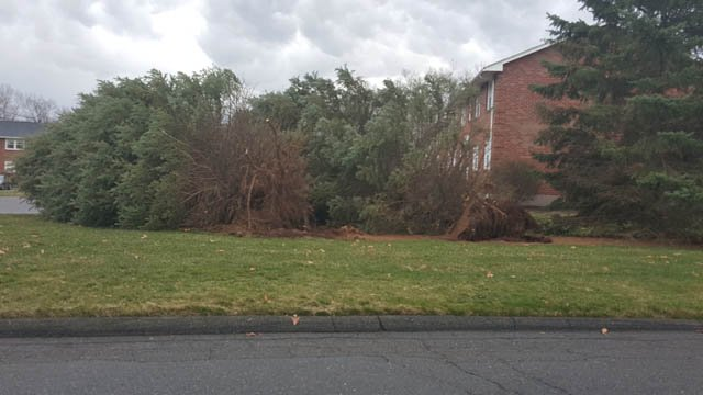 Winds ripped some trees down in Vernon on Thursday. (iwitness)