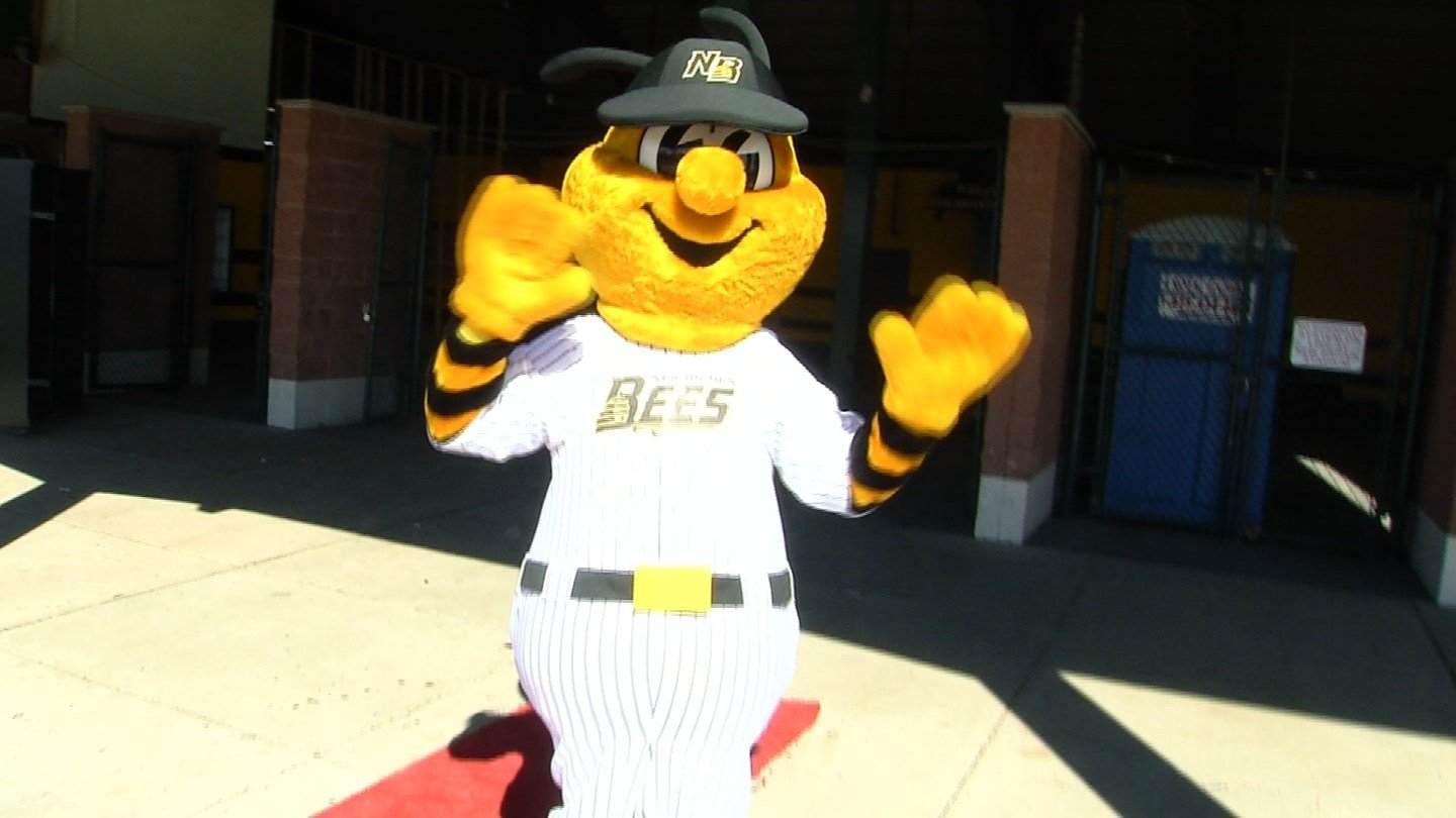New Britain Bees team's mascot Sting greets fans on Saturday. (WFSB)