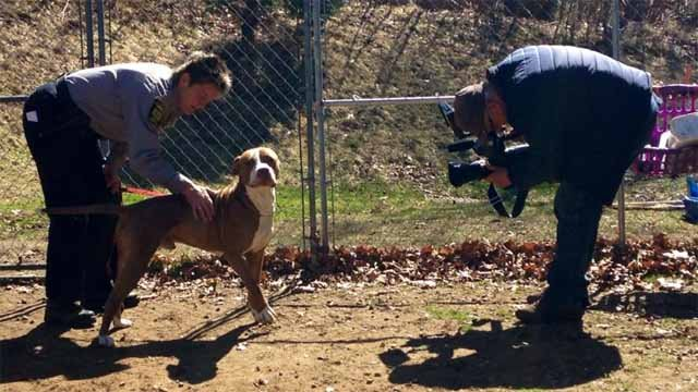 A Hartford animal shelter is dealing with being over capacity after taking in a handful of dogs that were dumped by their owners. (WFSB)