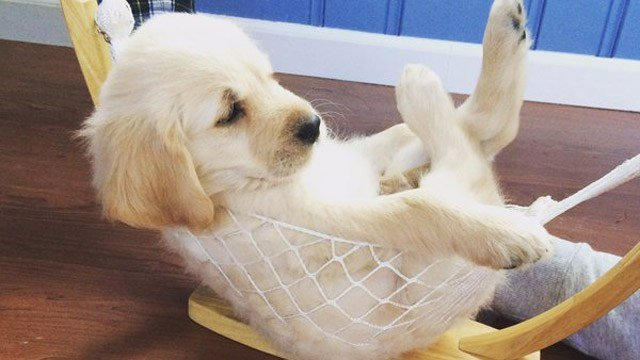 This is Hudson taking a load off on National Puppy Day. (Samantha/iWitness photo)