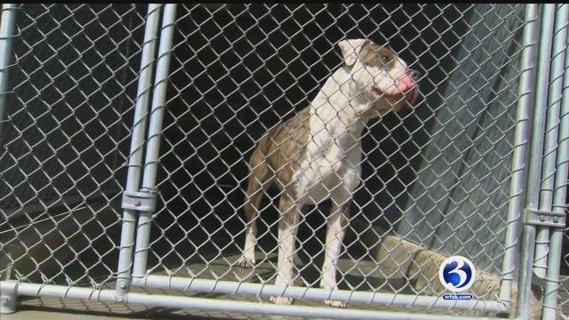 Dogs at the Hartford Animal Shelter are running out of time and in need of adoption. (WFSB)