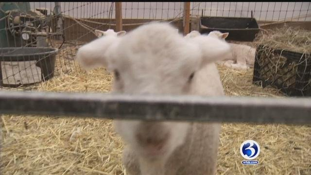 Oak Leaf Farm voluntarily closed to visitors for the weekend after six people contracted E.coli. (WFSB)