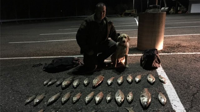 Officer Logiodice and his K-9 Ruger assisted in locating the illegal fish. (Connecticut State Environmental Conservation Police Facebook)