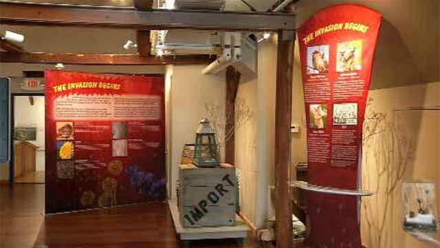 Invasive species exhibit opening at Connecticut River Museum (WFSB)