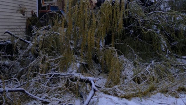 Hartford resident says this Weeping Willow came crashing down on his home on Mansfield Street. (WFSB)