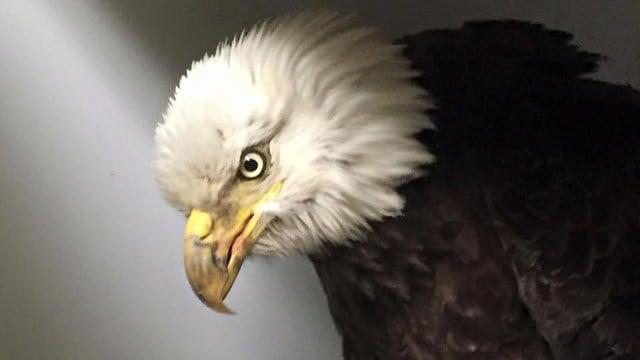 (Audubon Sharon photo)