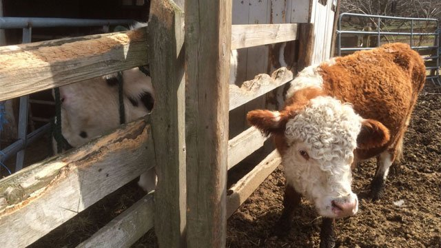 Bales of hay were stolen from farm in Bethany.  (Locket's Meadow Farm)
