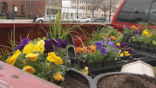 Some of flowers planted by the Eddinger family on Main Street in Middletown.  (WFSB)