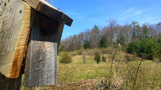 Meadow is off alternate path at preserve (WFSB)