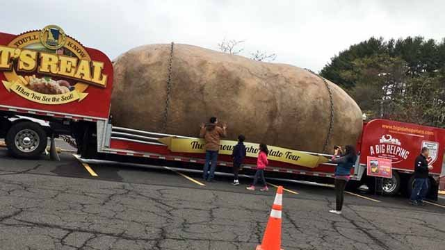 World's largest potato spotted in Connecticut on Monday (WFSB)