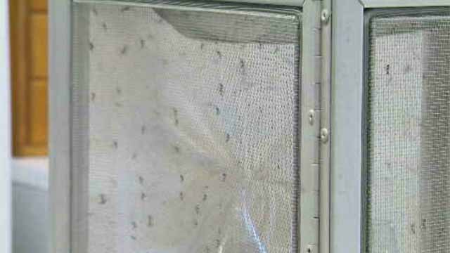 Funding is being cut from the state's mosquito testing budget (WFSB)