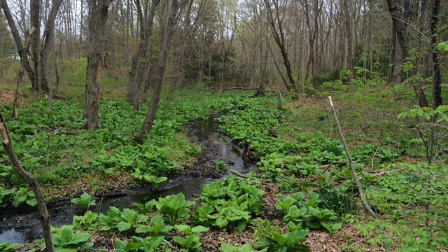 Greenery overtakes preserve's brook