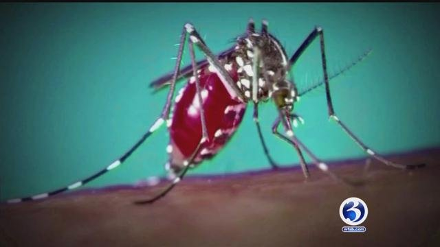 Mosquitoes in Connecticut to be tested for West Nile, Eastern Equine Encephalitis and Zika viruses