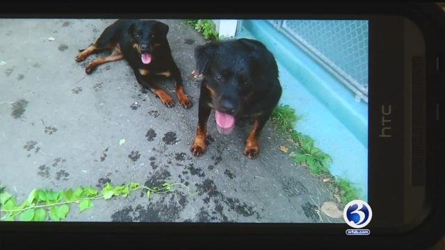 Connecticut woman fights to get Rottweilers Kato and Kleo back home.