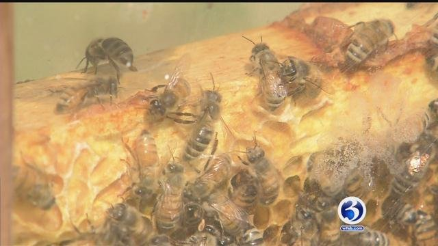 Connecticut group looks into the decline in honey bee colonies throughout the state. (WFSB)