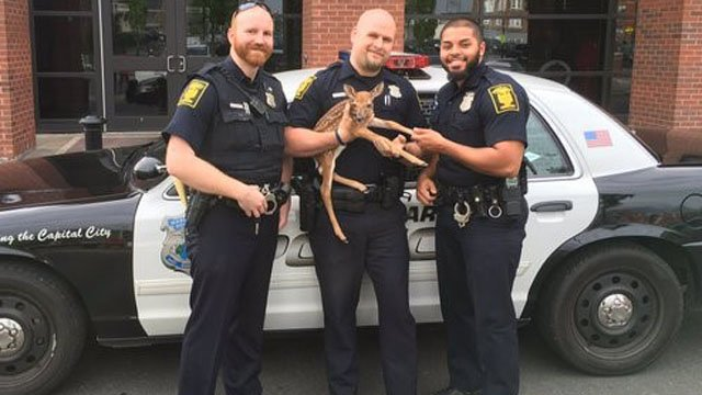 Hartford police said they recently rescued a fawn. (Hartford police photo)