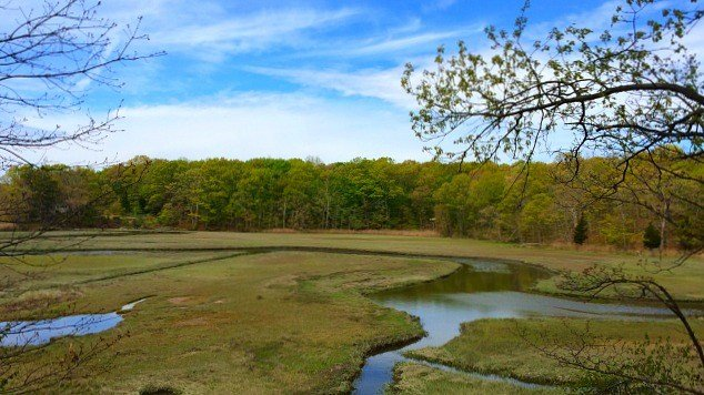 View of marsh from the green trail