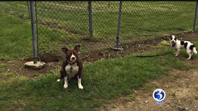 These two dogs were tied up and abandoned in East Haddam this week. (WFSB)