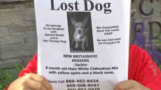 New Britain community searches for missing dog  (WFSB)