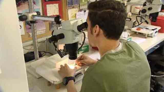 CT researchers will test mosquitoes for West Nile, Zika viruses (WFSB)