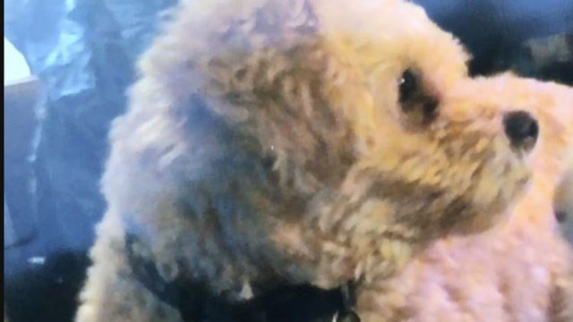 A Meriden woman's dog Buster died after he was bitten by a Copperhead snake. (WFSB)