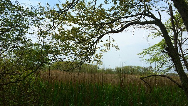 Birds flock to this preserve on the shore