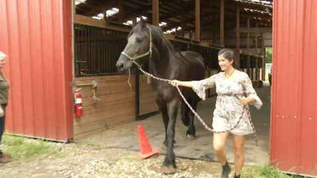 Two horses rescued from an East Hampton farm this year are heading to a new home in Alabama. (WFSB)