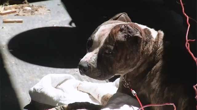 A case of an injured dog in Hartford led to an argument between two people on Tuesday. (WFSB)