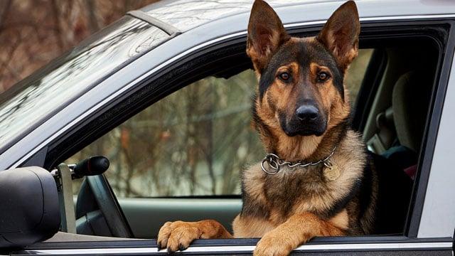 Tobi. (State police photo)