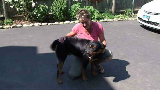 There has been a huge push to bring back Hartford's animal control officer. (WFSB)
