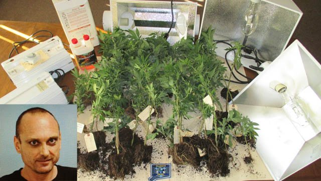 Mark O'Donnell was arrested for growing nearly 50 marijuana plants at his home near a school in Willimantic. (Willimantic police photos)