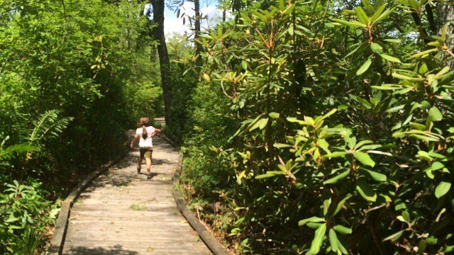 Trail into Rhododendron Sanctuary