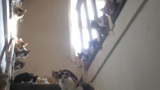 Police are investigating an incident of animal cruelty after 16 cats were found in an apartment in Hamden on Wednesday morning. (Halfway Home Rescue Inc.)