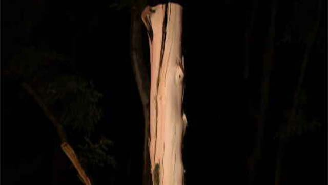 A couple was near a tree in West Haven when it was struck by a tree. (WFSB)