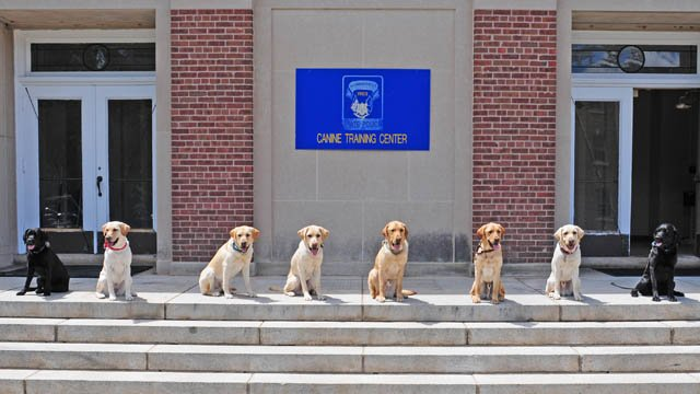 Eight dogs are now certified narcotic detection K9s. (State police photo)