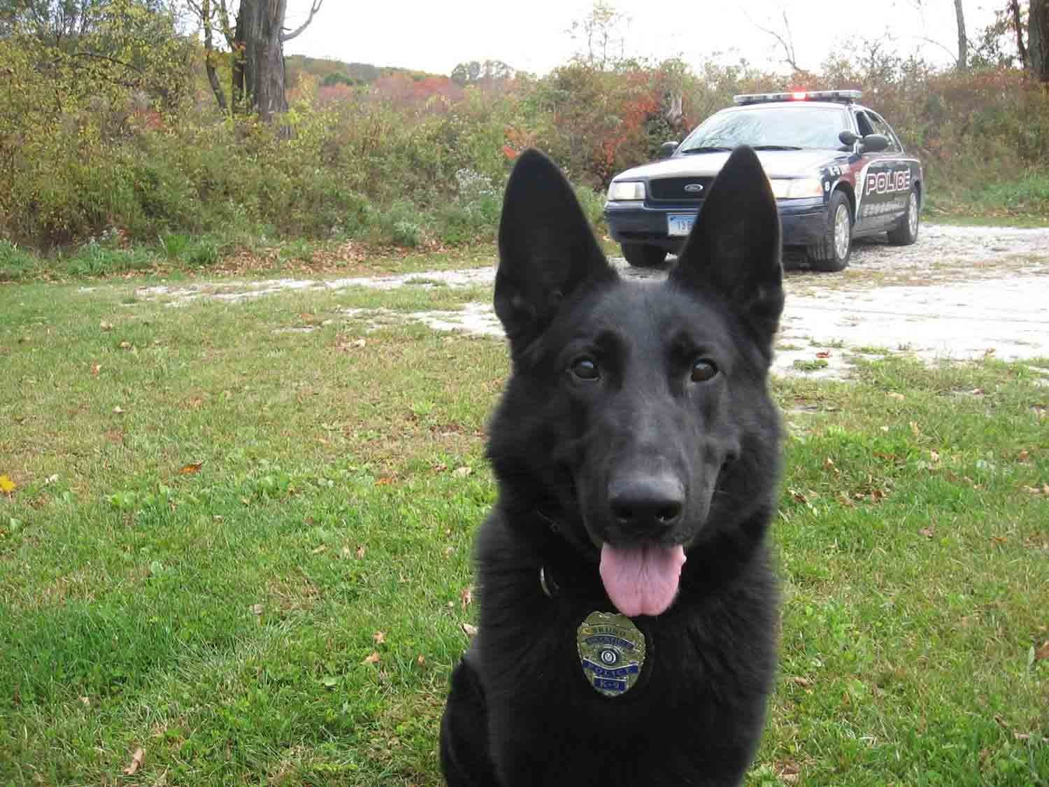 Bruno (Brookfield Police Department)