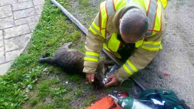 Firefighters gave a cat oxygen following a fire in Columbia. (Columbia Resident State Trooper's Office)