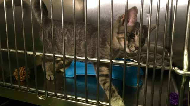Animals in Meriden could be impacted if rooms are taken away from the humane society. (WFSB)