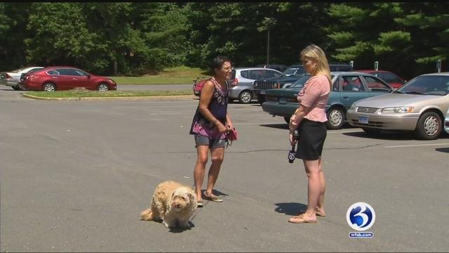 Nancy Velardi saw the dogs when she went out to her parking lot of her Flanders West apartment. (WFSB)