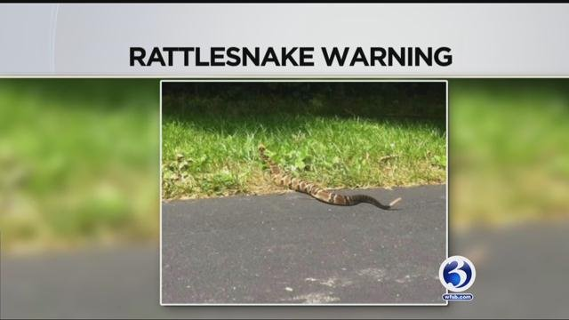 A snake expert from the Department of Energy and Environmental Protection was called to Enfield on Wednesday. (WFSB)