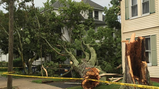 Tree hits home in Ansonia. (WFSB)