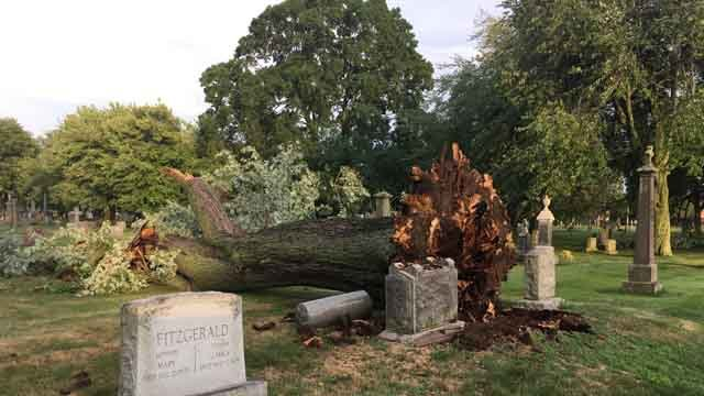 Storms uprooted a giant tree at a New Haven cemetery. (WFSB)