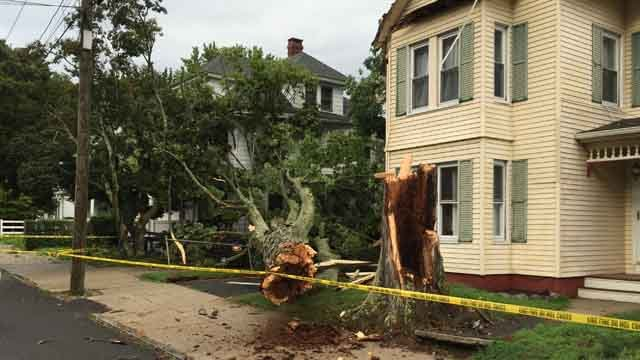 Storms brought down a huge maple tree in Ansonia on Monday. (WFSB)
