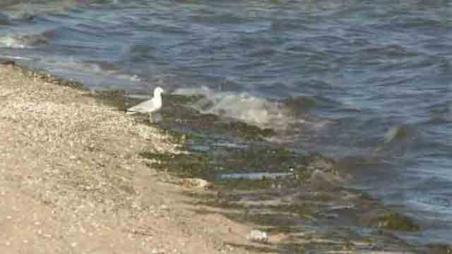 Black algae and sewage found in West Haven water. (WFSB)