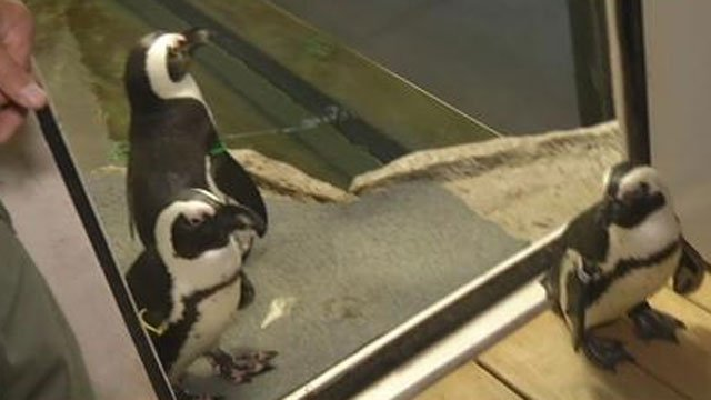 Animals at Beardsley Zoo are trying to stay cool. (WFSB)