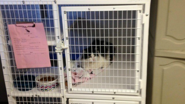 Milford PD say a woman abandoned 2 dogs and three cats at her home on Mayflower place. (WFSB)