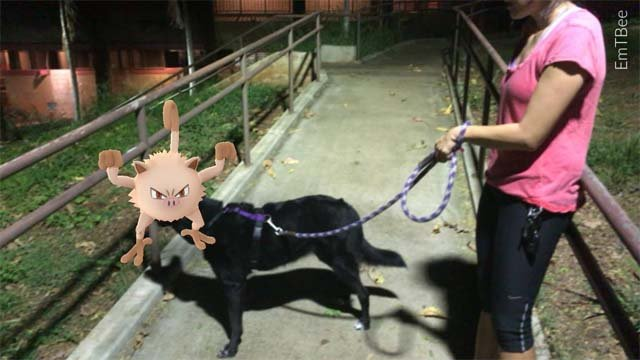 Pokemon Go craze benefitting local rescue organizations (submitted)